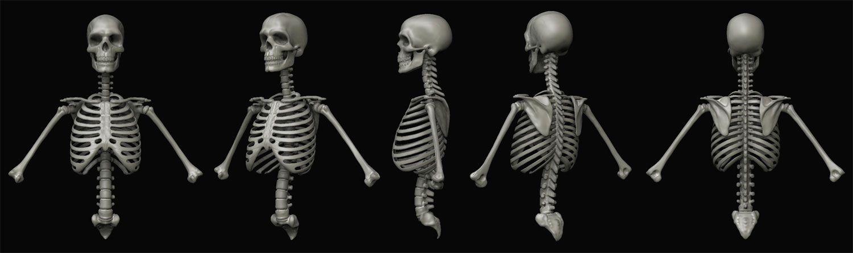 3D-skelett Medizinische 3D Visualisierung
