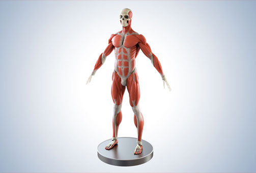 Medical 3D visualization